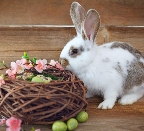 eatser rabbit and a nest easter eggs