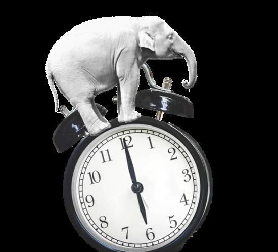 Early Elephant Hour